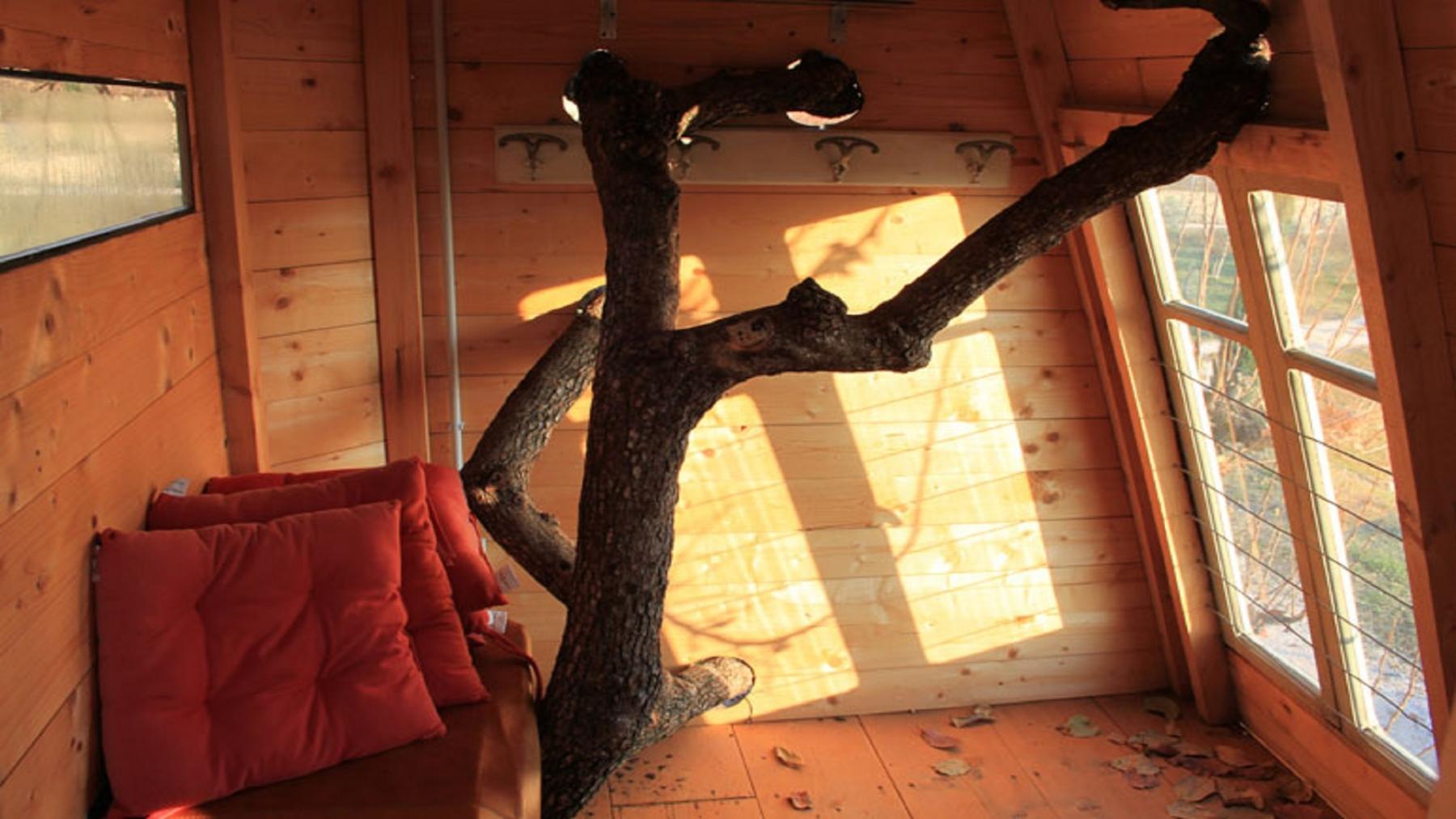 6-abitare-sugli-alberi