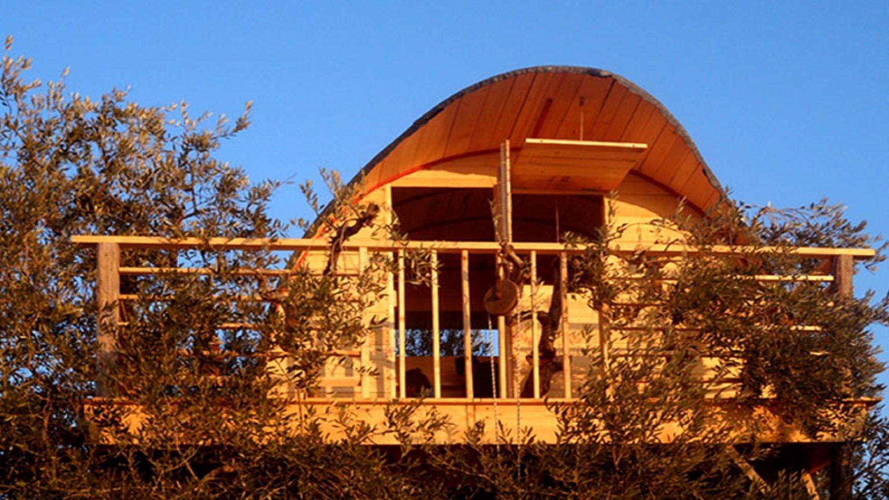 casa sugli olivi