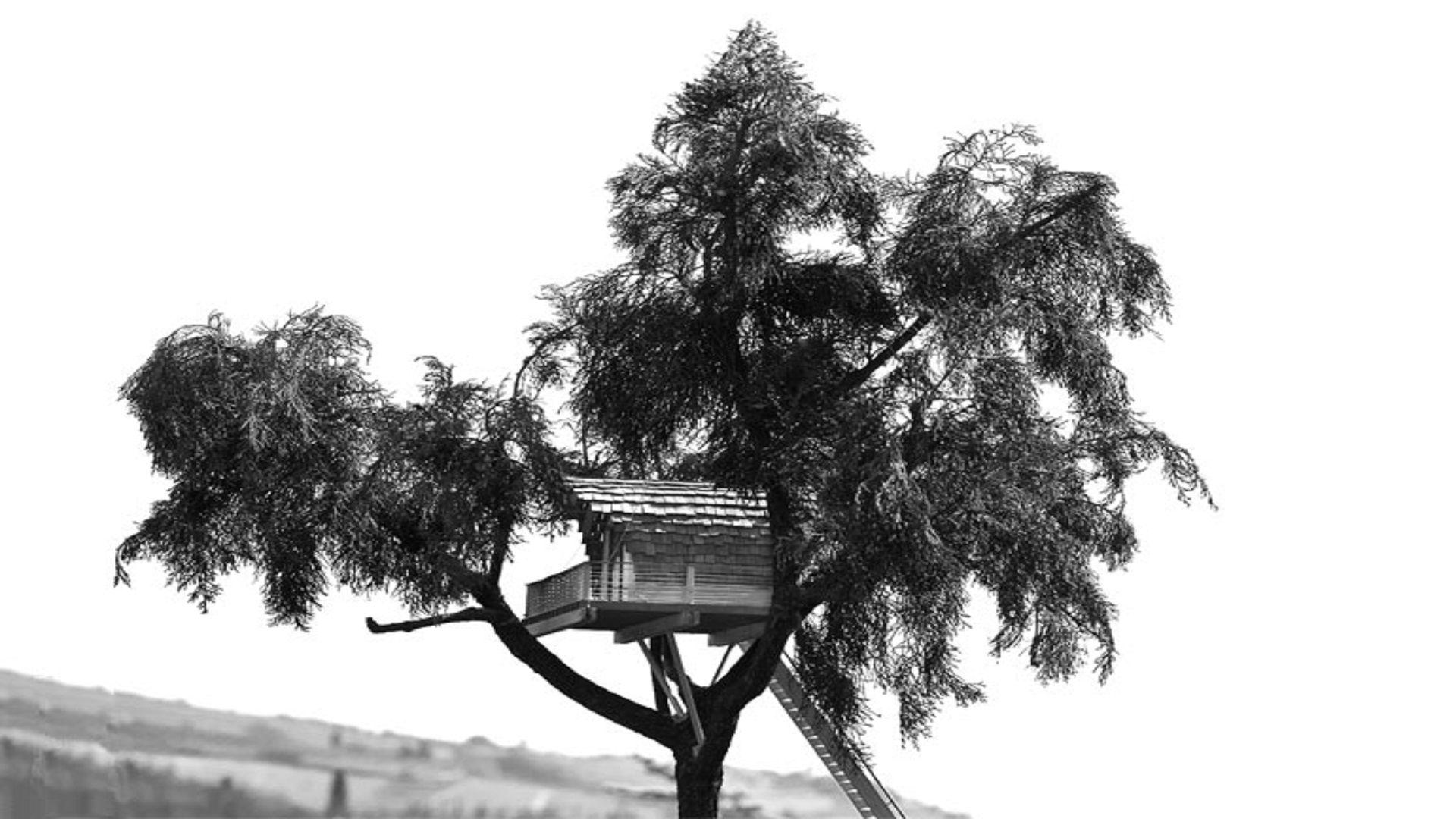 bozza casa sull'albero