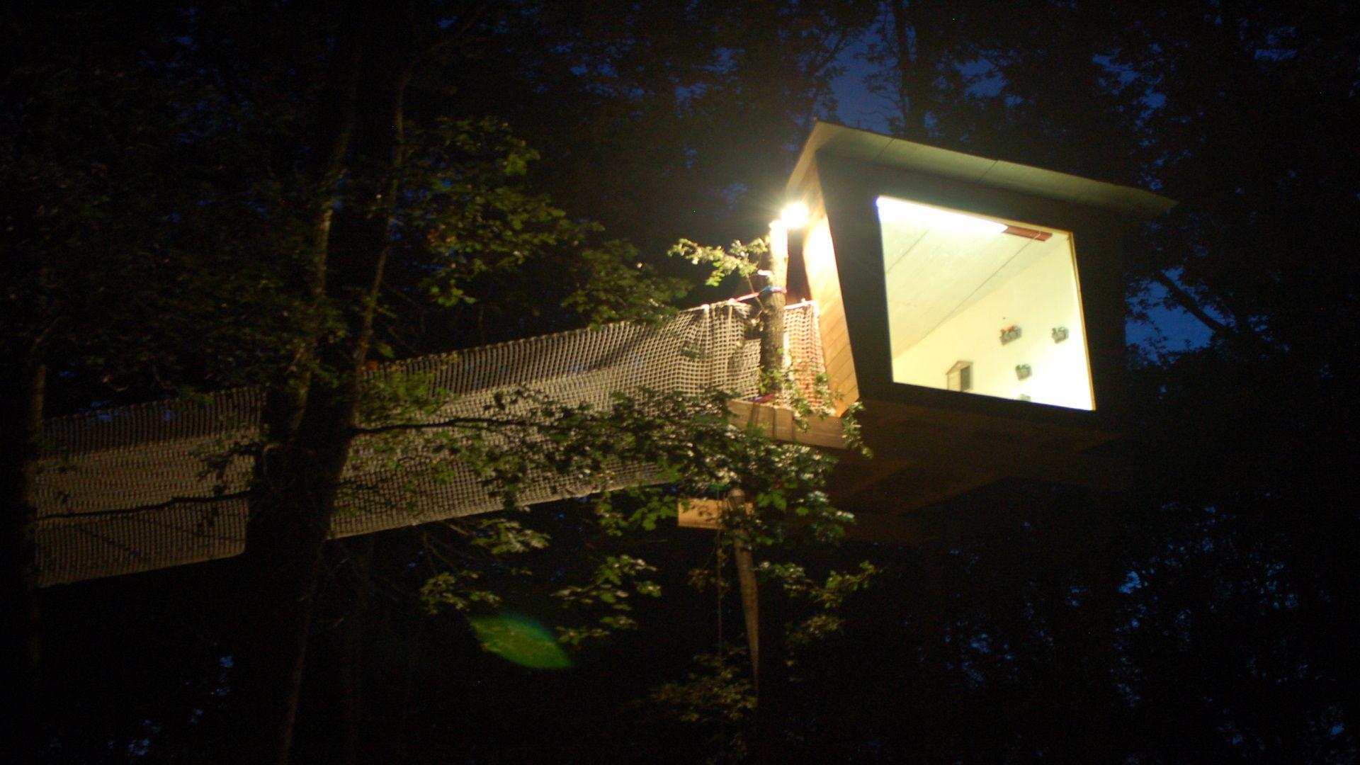 avvistamenti sull albero di sera