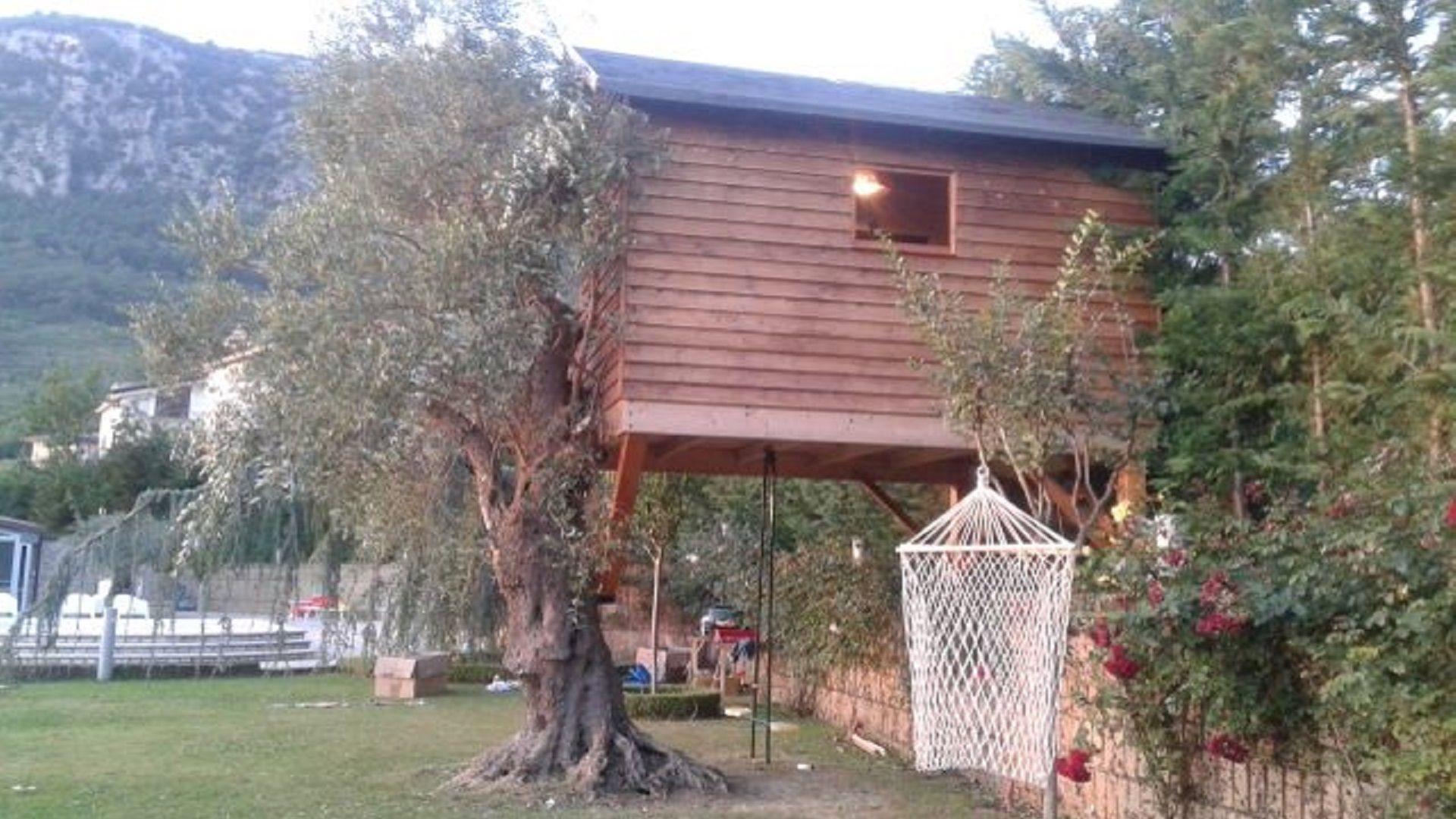 casa sull'ulivo