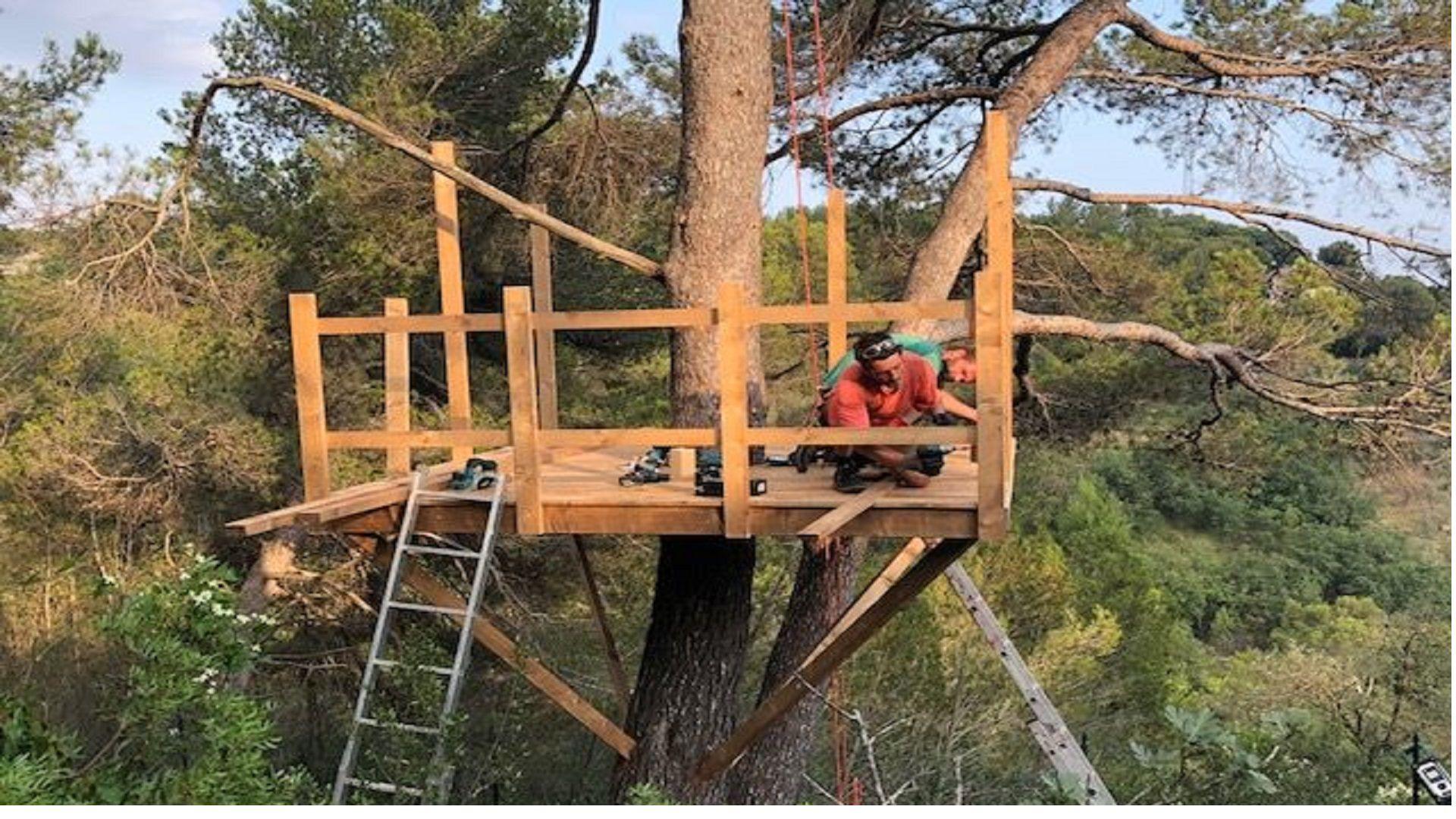il nido del falco sugli alberi
