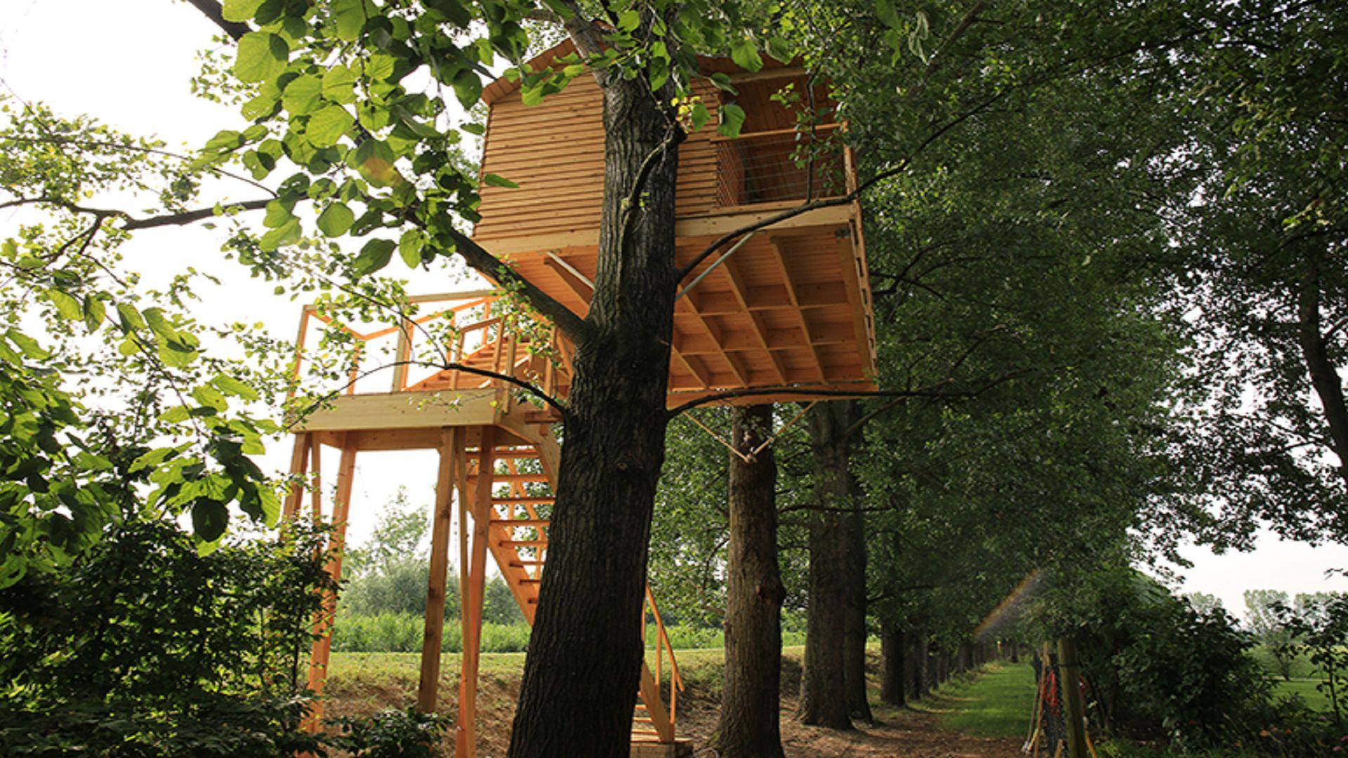suite sull albero